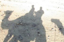Camel shadows